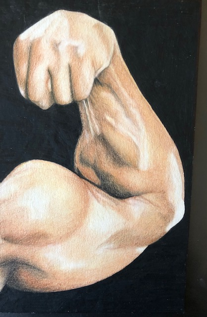 muscular arm on cartridge paper with coloured pencils
