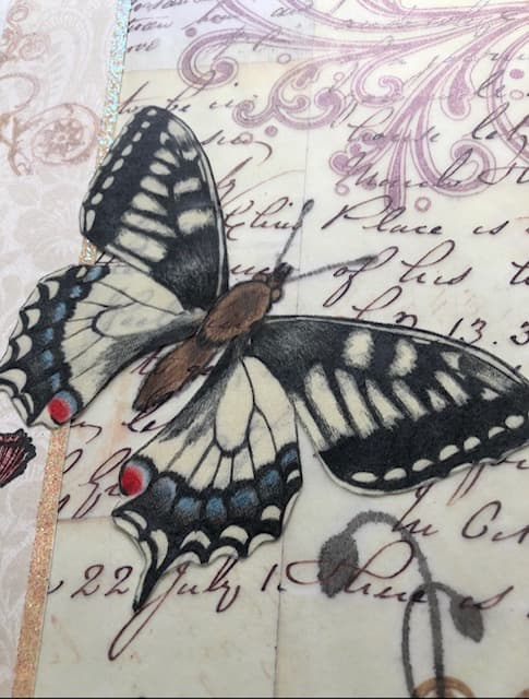 butterfly drawn on tracing paper