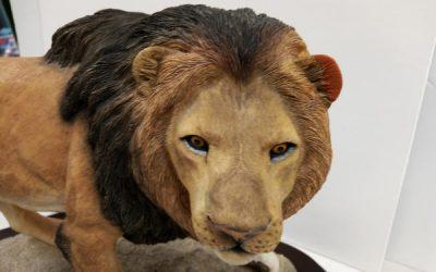Lions Ears Repair!