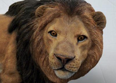 Lion ears