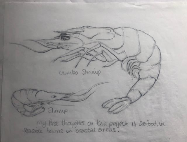 shrimp pencil sketch