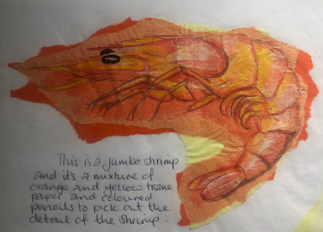 tissue-shrimp